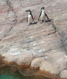 Pinguin Lizenzfreie Stockbilder