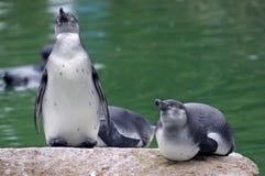 Pinguin Stockfotos