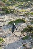 Pinguin auf einem Strand Lizenzfreie Stockbilder