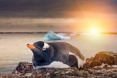 Pinguin in der Antarktis Stockbild