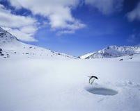 Pinguin, der hinunter ein Loch im Eis schaut Stockfotos