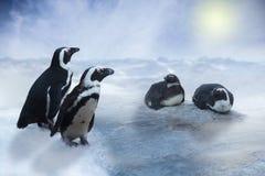 Pinguin im Schnee und das Eis, blauer Himmel und Sonne Lizenzfreies Stockfoto