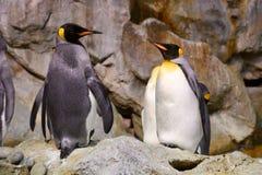 Pinguin im Zoo Stockfotografie