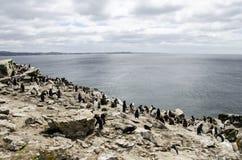 PINGUIN-KOLONIE Lizenzfreie Stockfotografie