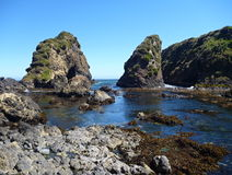 Pinguin reservation islotes de punihuil sull'isola del chiloe in peperoncino rosso fotografia stock