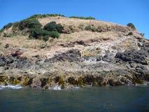 Pinguin reservation islotes de punihuil sur l'île de chiloe en piment Image libre de droits