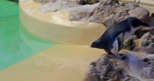Pinguin sagen Lebensmittel nach stock video footage