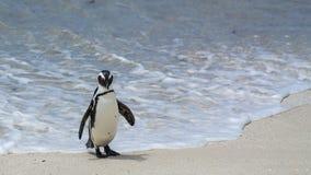 Pinguin-Strand, Südafrika Stockfotos