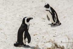 Pinguin-Strand, Südafrika Stockbild
