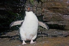 Pinguin unter einem Strom des Wassers Lizenzfreies Stockbild