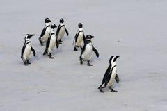 Pinguine Stockbild