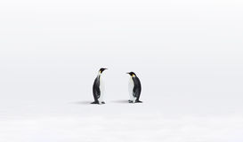 Pinguine in Antarktik Stockfoto