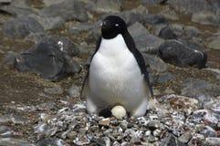 Pinguine in Antarktik Stockfotos