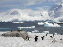 Pinguine in Antarktik Stockbilder