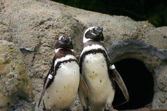 Pinguine auf Bildschirmanzeige stockfotografie