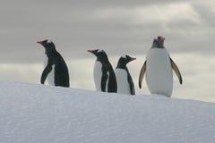 Pinguine auf einem Eisberg Stockfotos