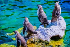 Pinguine auf einem Felsen lizenzfreie stockfotos