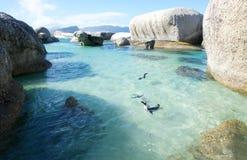 Pinguine auf Flusssteinen Lizenzfreie Stockbilder