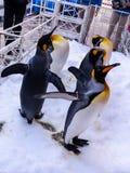 Pinguine auf garth Schnee stockbild