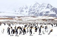Pinguine auf Schnee Stockbild