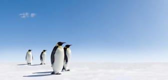 Pinguine auf schneebedeckter Landschaft Stockfotos