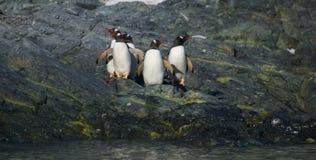 Pinguine auf Ufer Lizenzfreies Stockfoto