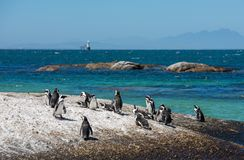 Pinguine an den Flusssteinen setzen in Simons Town, Cape Town, Afrika auf den Strand stockfotos