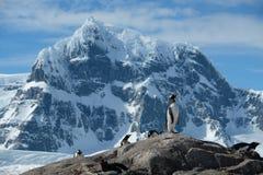Pinguine der Antarktis Gentoo stehen gezackte schneebedeckte Berge 2 lizenzfreies stockbild