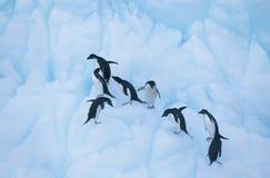 Pinguine, die auf Eis klettern Lizenzfreie Stockbilder