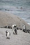 Pinguine am Fluss-Stein-Strand Lizenzfreies Stockbild