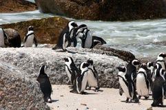 Pinguine am Flusssteinstrand Stockfoto