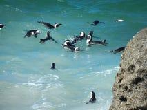 Pinguine am Flussstein-Strand, Cape Town Lizenzfreies Stockfoto