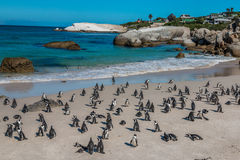 Pinguine im Flussstein-Strand Südafrika lizenzfreies stockbild
