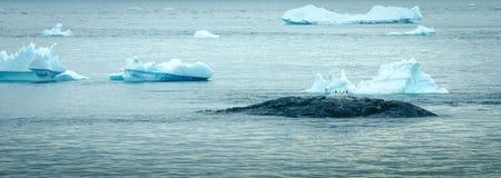 Pinguine stehen auf einem Felsen unter Eisbergen in der Antarktis still Lizenzfreie Stockfotos