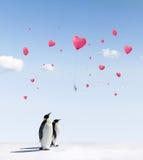 Pinguine und Ballone Stockfotografie