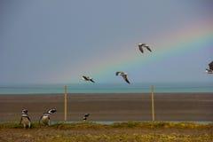 Pinguine und Seemöwen mit einem schönen Regenbogen Lizenzfreie Stockfotos