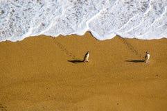 Pinguine ziehen sich nach Hause zurück Stockfoto