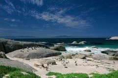 Pinguini africani Fotografia Stock
