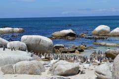 Pinguini africani sulla spiaggia Fotografia Stock