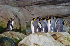 Pinguini al giardino zoologico di Berlino Fotografia Stock Libera da Diritti