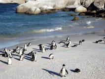 Pinguini alla spiaggia Sudafrica dei massi fotografia stock libera da diritti