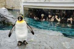 Pinguini allo zoo di Asahiyama fotografie stock