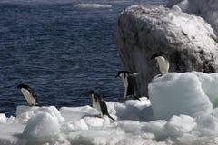 Pinguini antartici Fotografie Stock