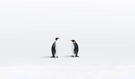 Pinguini in Antartide Fotografia Stock