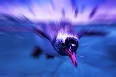 Pinguini che nuotano Immagine Stock Libera da Diritti