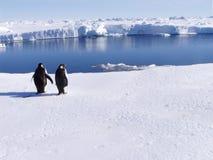Pinguini con una vista Fotografia Stock Libera da Diritti