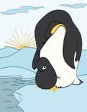 Pinguini del bambino e della madre Fotografie Stock