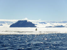 Pinguini di Adelie in Gustaf Sound, Antartide Fotografia Stock