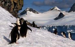 Pinguini di Chinstrap su neve, Antartide