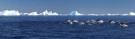 Pinguini di immersione subacquea Fotografie Stock Libere da Diritti